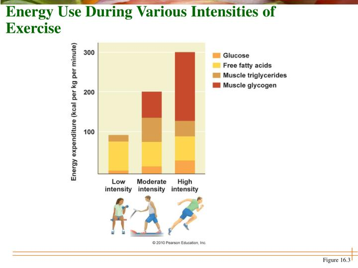 Energy Use During Various Intensities of Exercise