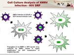 cell culture analysis of xmrv infection hiv drp1