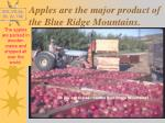 apples are the major product of the blue ridge mountains1