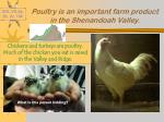 poultry is an important farm product in the shenandoah valley