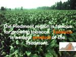 the piedmont region is famous for growing tobacco tobacco is a major product of the piedmont