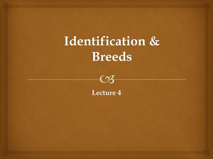 identification breeds n.