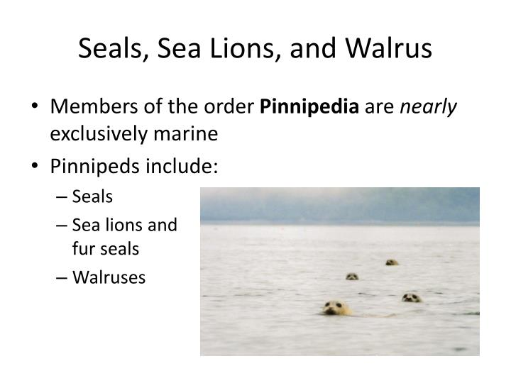 seals sea lions and walrus n.