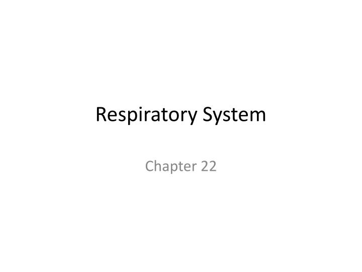 respiratory system n.