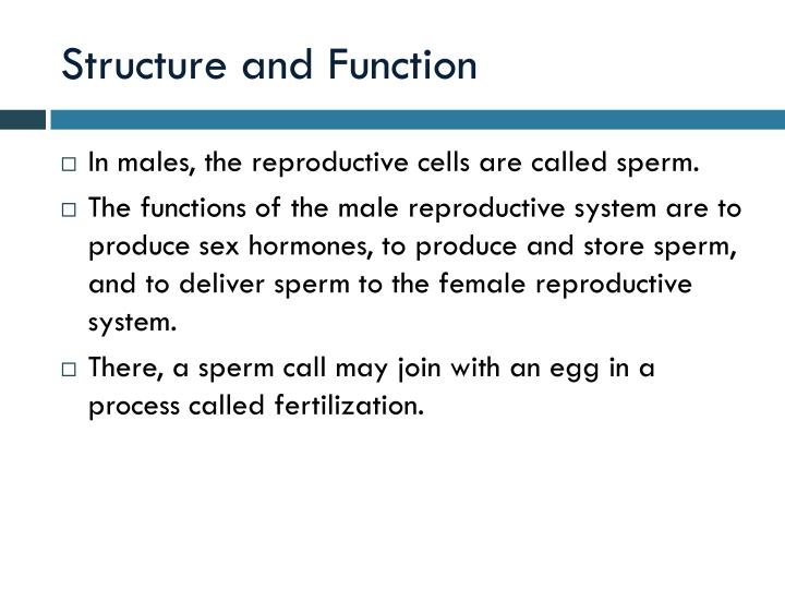 Ppt The Male Reproductive System Powerpoint Presentation Id1770994
