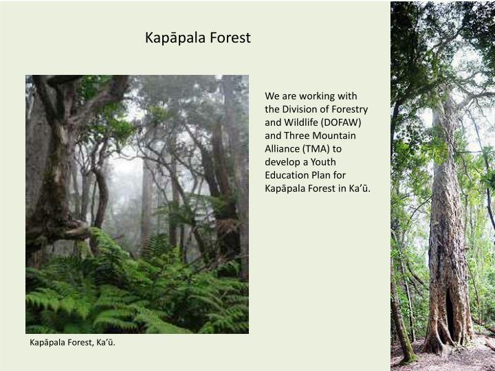 Kapāpala Forest