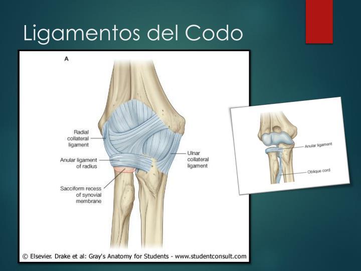 PPT - Codo y Fosa Cubital PowerPoint Presentation - ID:1772668