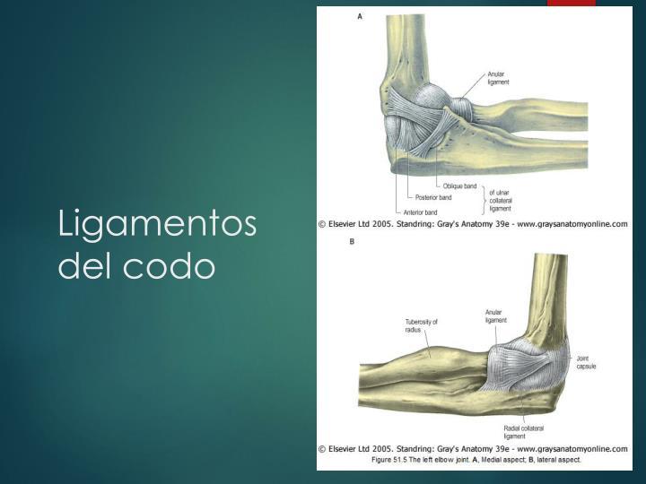 Lujo Ligamentos En El Codo Cresta - Anatomía de Las Imágenesdel ...