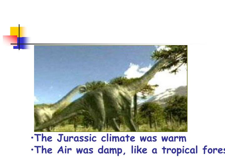 The Jurassic climate was warm