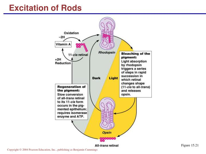 Excitation of Rods