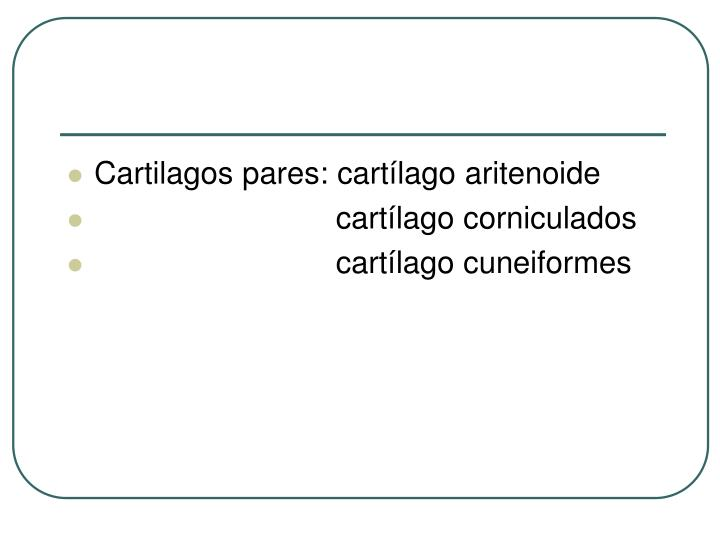 Cartilagos pares: cartílago aritenoide
