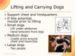 lifting and carrying dogs