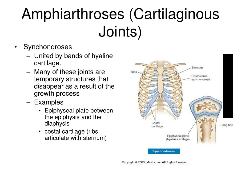 Ppt Articulations Chapter 9 Powerpoint Presentation Free Download Id 1773420 After a temporary posterior fixation of c1/c2 we reamed the synchondrosis from anterior and performed. ppt articulations chapter 9