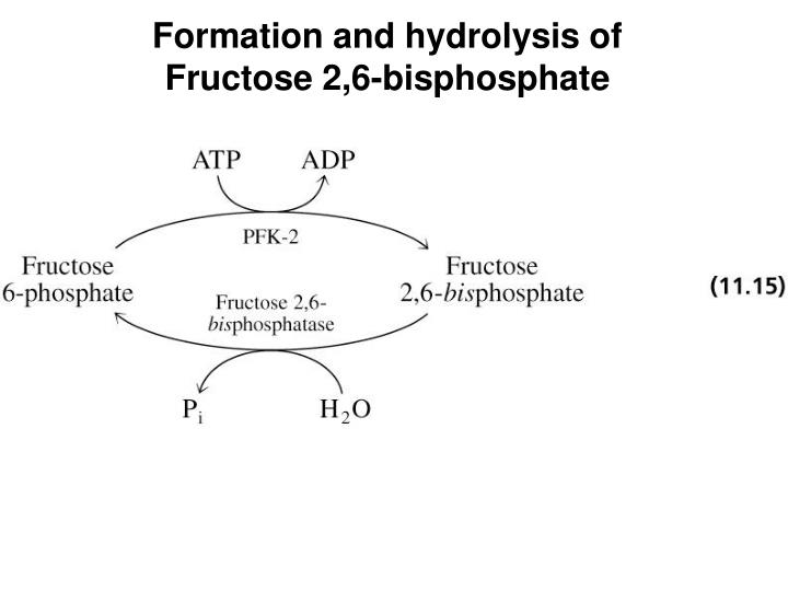 Formation and hydrolysis of
