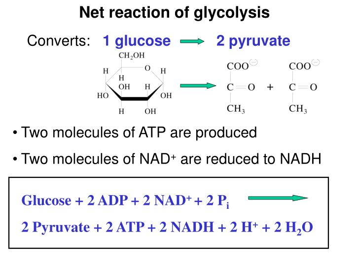 Net reaction of glycolysis