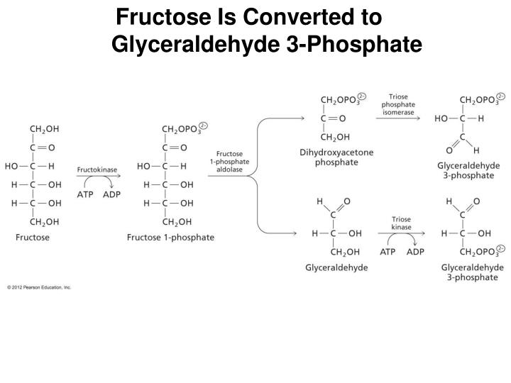 Fructose Is Converted to Glyceraldehyde 3-Phosphate