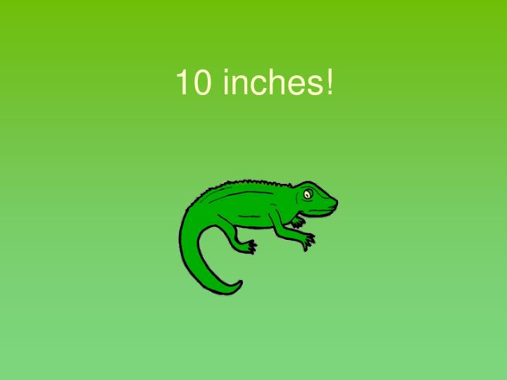 10 inches!