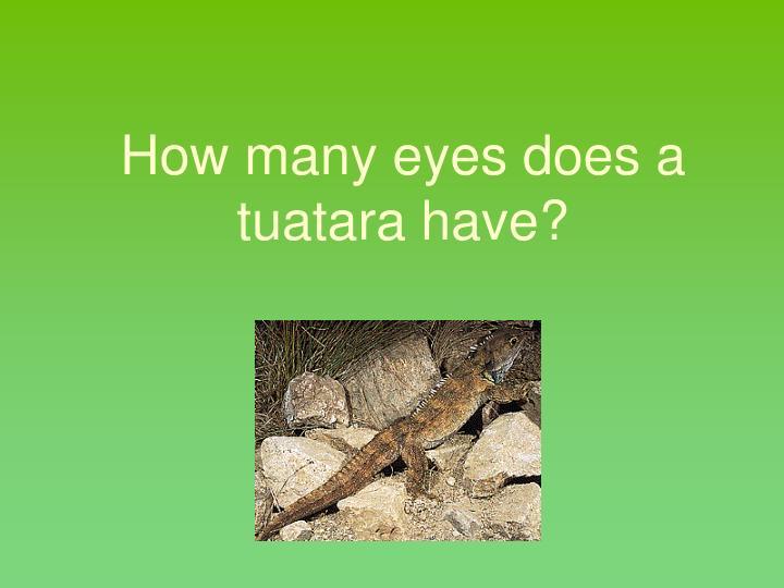 How many eyes does a tuatara have?