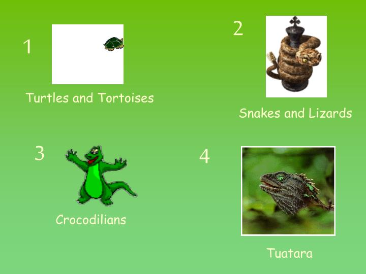 What do you know about reptiles