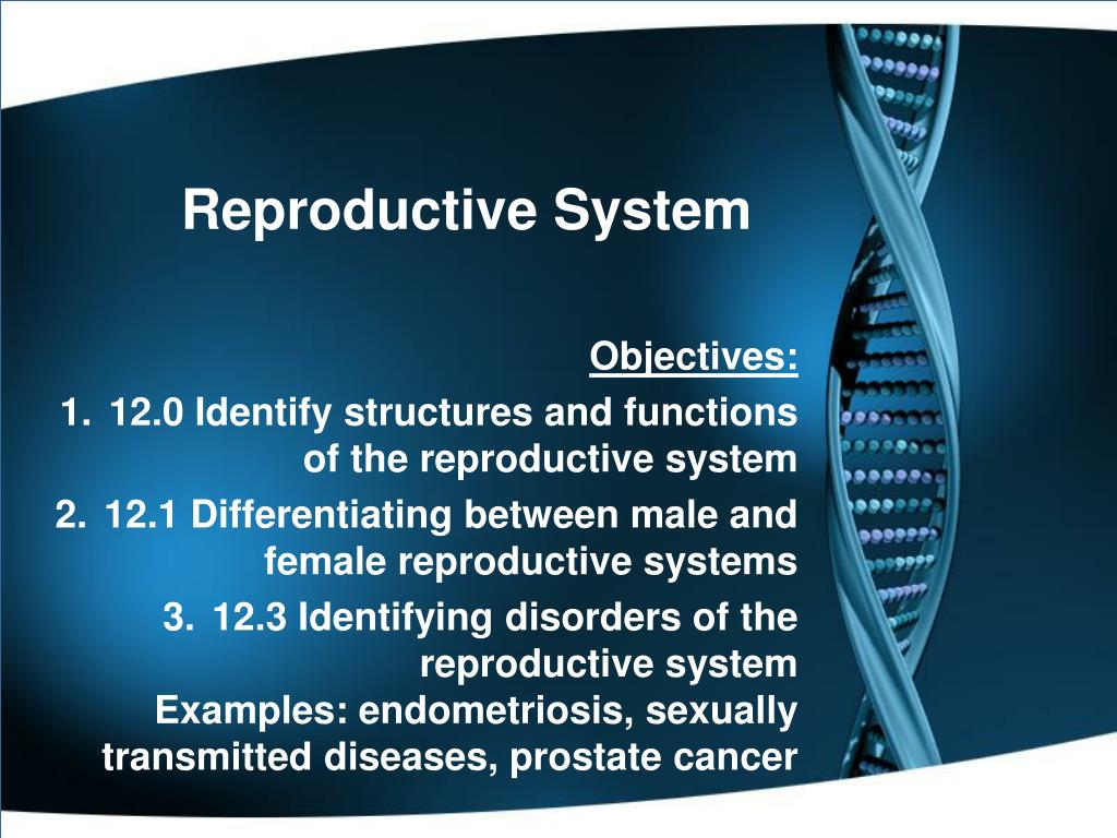 Ppt Reproductive System Powerpoint Presentation Free Download Id 1773650