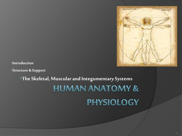 introduction structure support the skeletal muscular and integumentary systems n.