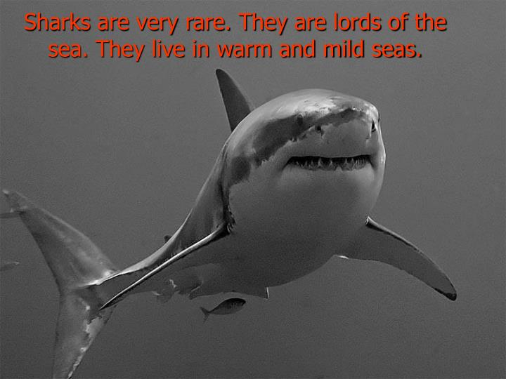 Sharks are very rare. They are lords of the sea. They live in warm and mild seas.