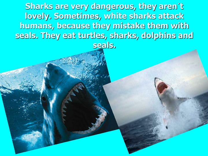 Sharks are very dangerous, they aren´t lovely