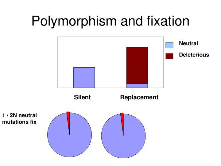 Polymorphism and fixation