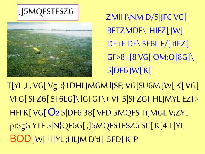 ZMlH\NM D/5|JFC VG[ BFTZMDF\  HIFZ[ JW] DF+F DF\ 5F6L E/[ tIFZ[ GF>8=[8 VG[ OM:O[8G]\ 5|DF6 JW[ K[