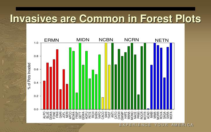 Invasives are Common in Forest Plots