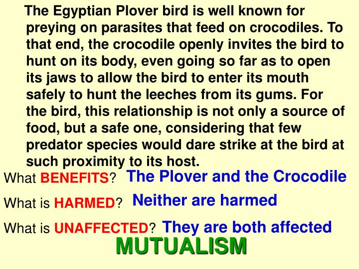 The Egyptian Plover bird is well known for preying on parasites that feed on crocodiles. To that end, the crocodile openly invites the bird to hunt on its body, even going so far as to open its jaws to allow the bird to enter its mouth safely to hunt the leeches from its gums. For the bird, this relationship is not only a source of food, but a safe one, considering that few predator species would dare strike at the bird at such proximity to its host.