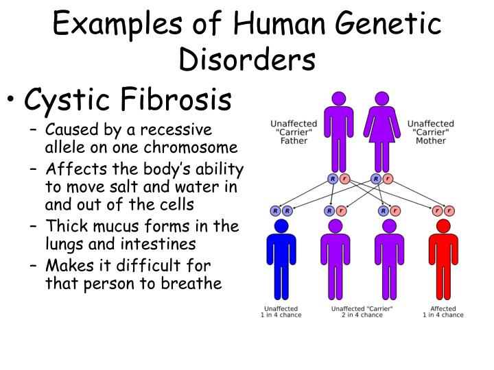 Examples of Human Genetic Disorders