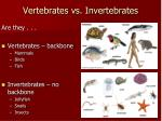 vertebrates vs invertebrates
