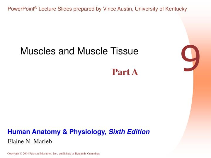 muscles and muscle tissue n.