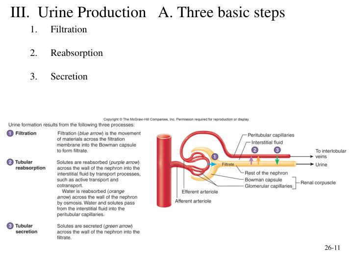 three processes involved in urine formation