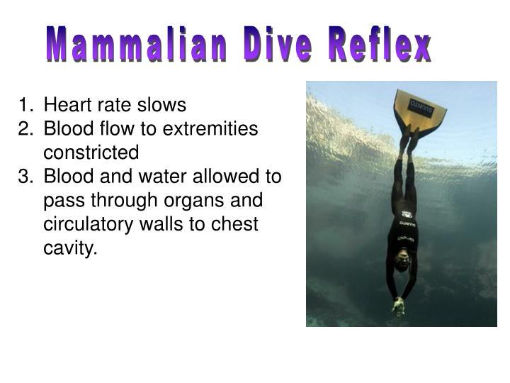 mammalian dive reflex
