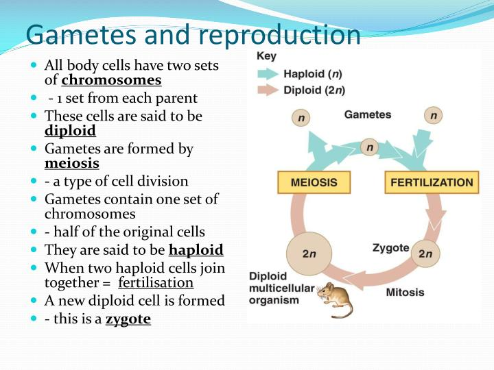 Articles of confederation article 2 advantages of asexual reproduction