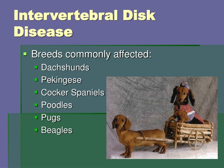 Intervertebral Disk Disease