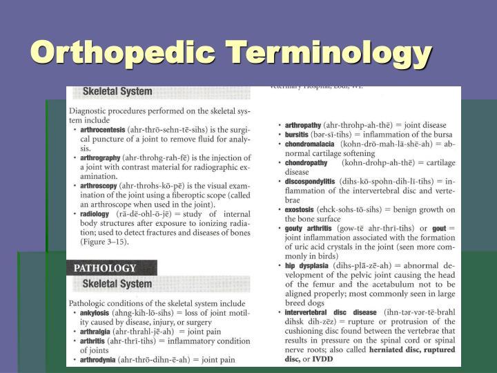 Orthopedic Terminology