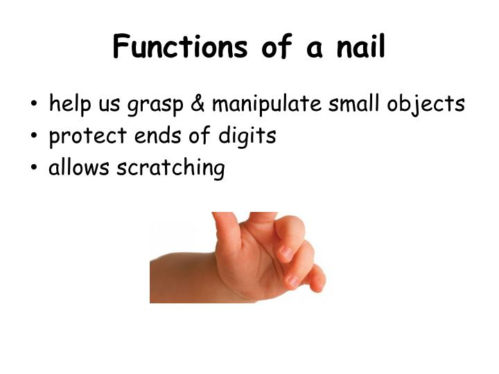 Functions Of A Nail