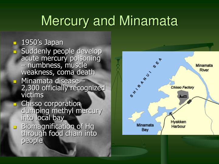minamata bay toxic waste essay Water pollution almost always means that  a lot of toxic pollution also enters waste water from  a significant amount of mercury metal into minamata bay,.