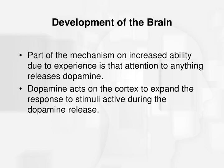 Development of the Brain