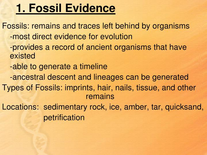 1. Fossil Evidence