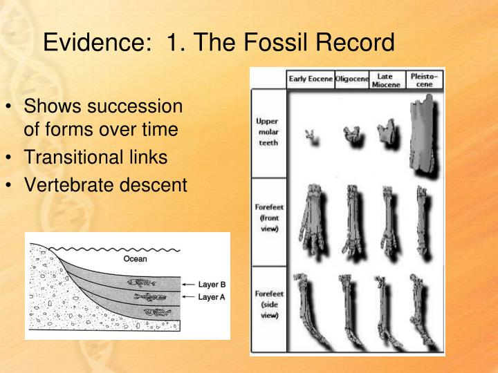 Evidence:  1. The Fossil Record