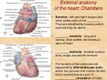 external anatomy of the heart chambers