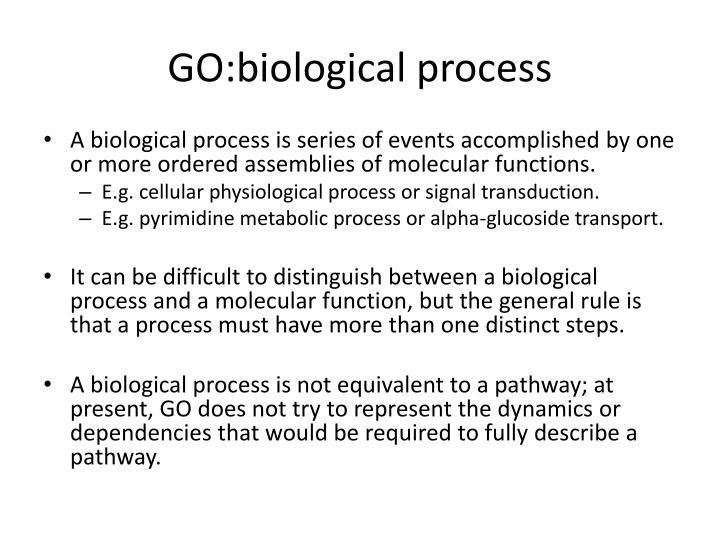 GO:biological process