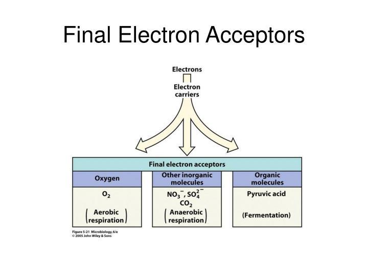 Final Electron Acceptors