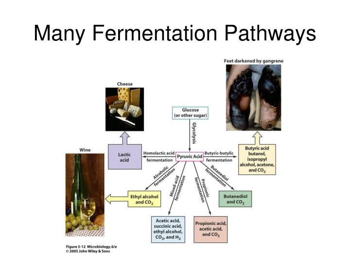 Many Fermentation Pathways