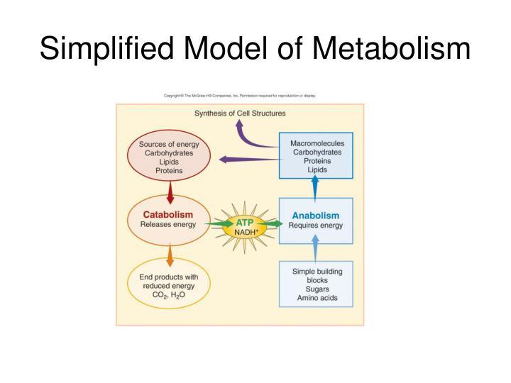 Simplified Model of Metabolism