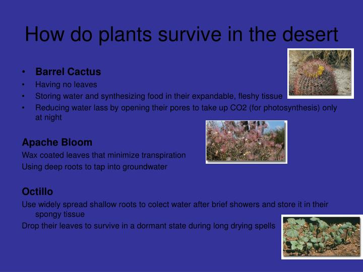 How do plants survive in the desert